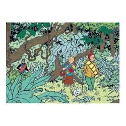 "poster ""Jungle"""